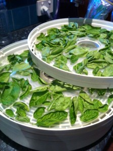 Basil in the dehydrator